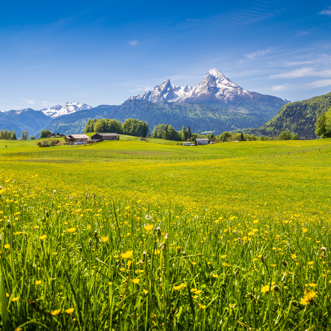 Idyllic landscape in the Alps with green meadows and flowers